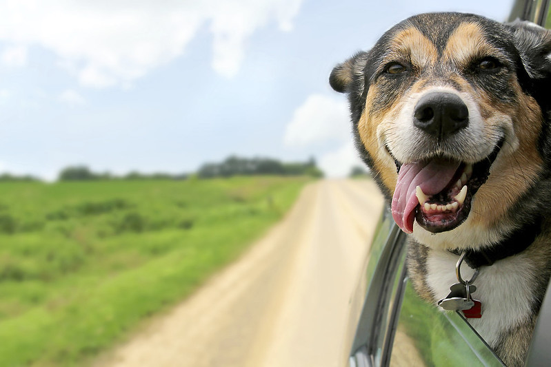 Best Cars for Dog Lovers - Gossett Kia South - Memphis, TN